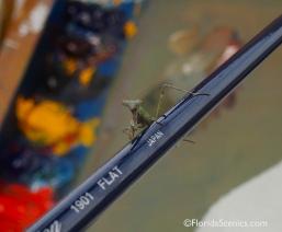 Praying Mantis landed on my pallet!