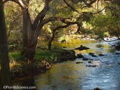 Beautiful scene on the river