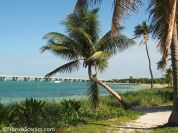 Leaning palm over the beach