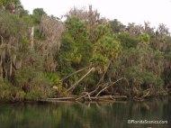 Palms along the river
