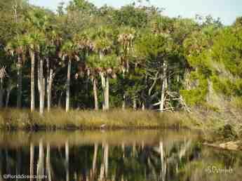 Heron fishing the reeds