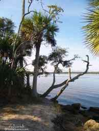 Palms on the shore