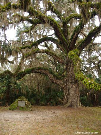 Oak and dedication stone
