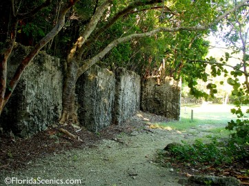 Trees growing from wall