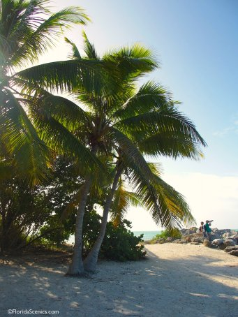 Leaning palms on the beach