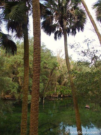 View through the palms