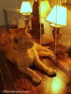 Hemmingway Cat