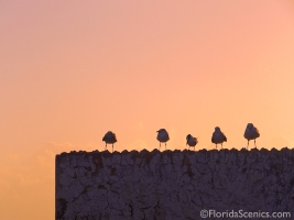 Seagulls enjoy sunset