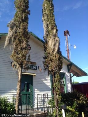 Old cedar trees