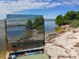 mangrovebeach