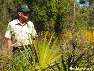 Forester Mike Martin surveys the land