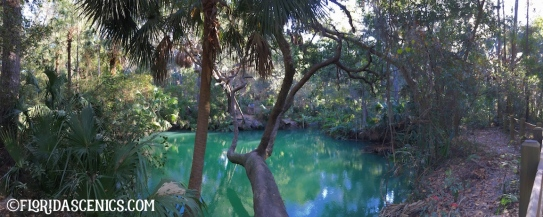 Beautiful Green spring